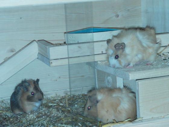 Die drei kleinen Meerlie-Babies x3