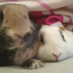 Meine verstorbenen Kaninchen