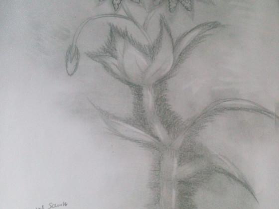 Pflanzenzeichnung