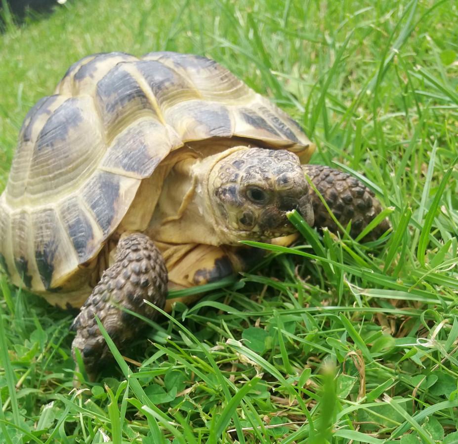 Meine Schildkröte <3