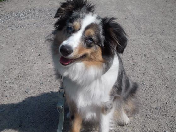 Klein Luna beim Spaziergang (8 1/2 Monate alt)