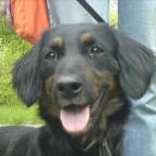 Nochein Hund aus dem Tierheim :D