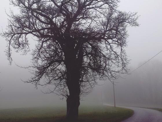 """Silent Tree"""