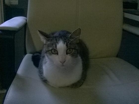 Meine Katze ;-)