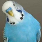 Blauer Welli