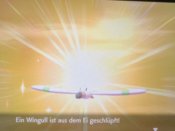Shiny Wingull
