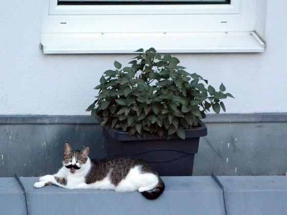 kadse von und zu balkonien