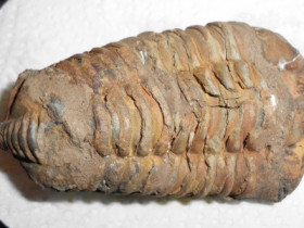 Domfossil?