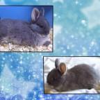 Lilly mein Kaninchen
