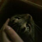Katzen machen Faxen, tya.