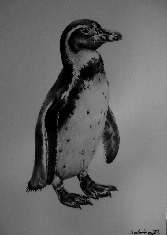 Humboldt-Pinguin, wieder^^