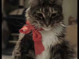 Kätzchen mit roter Schleife