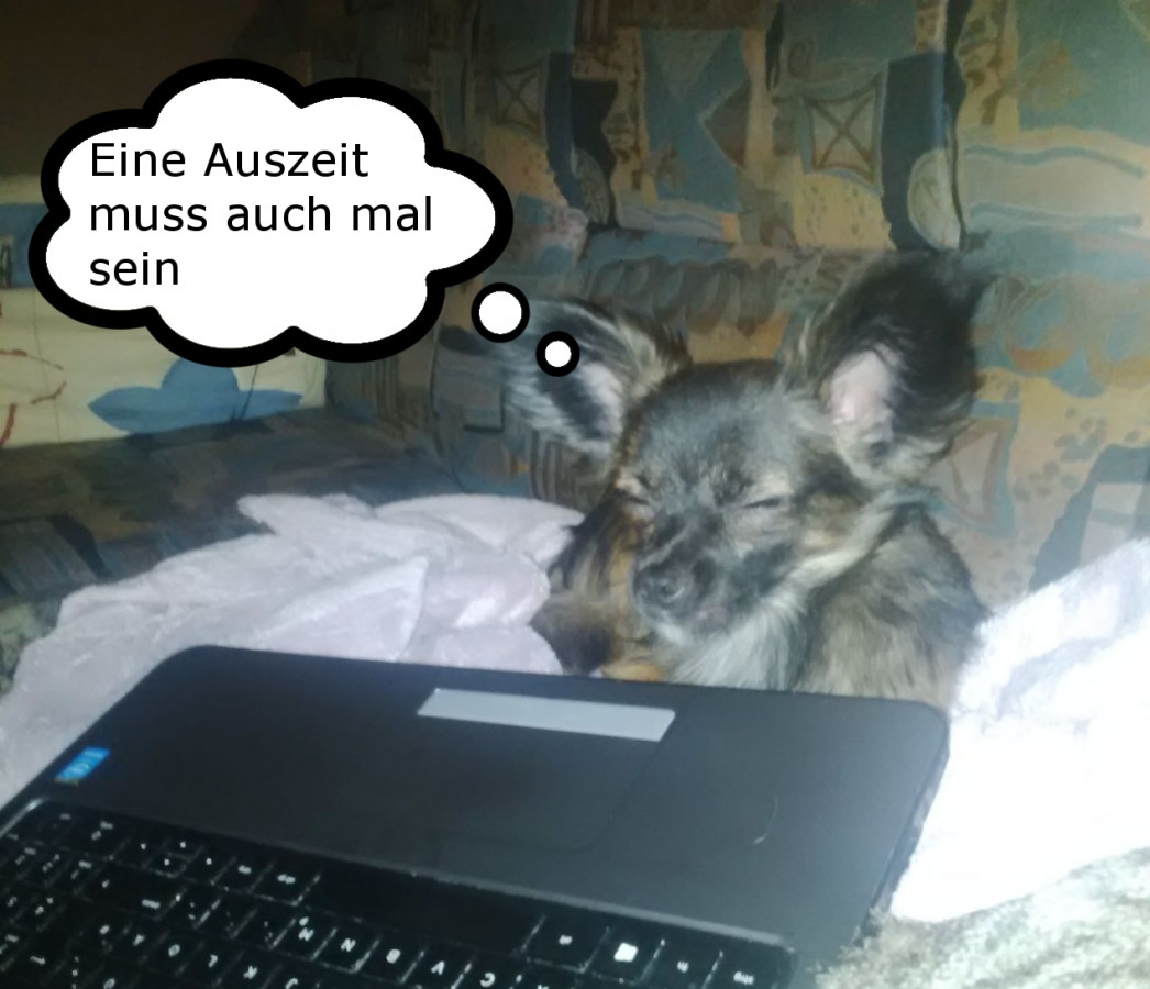 Hund am Laptop