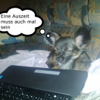 Hund am Laptop