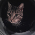 Katze :D