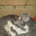 Komaki, ihre Babys & Kyon