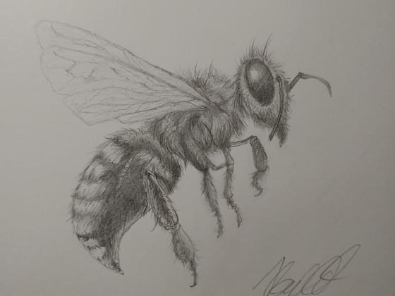 Meine erste Biene