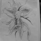 Flower ✿