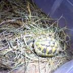 Weitere Bilder meiner Schildkröte