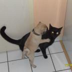 Kitty und Hugo