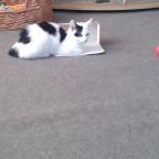 Mein Katze