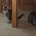 Jetzt seht ihr mal die beiden süßen ):