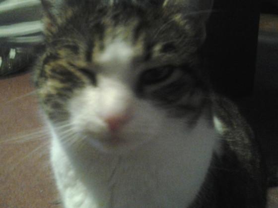 Meine Katze zwinkert dir zu ;D