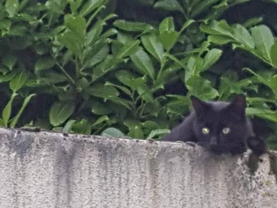 Garagen Katze