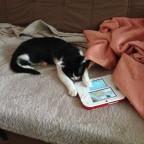 Meine katze:Sie ist ein echter elektro suchti xD