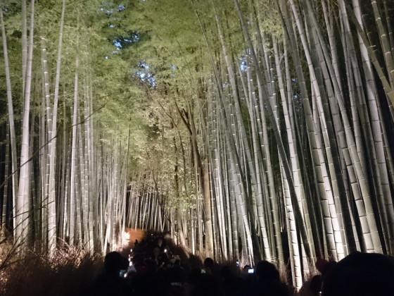 Bambuspfad Arashiyama