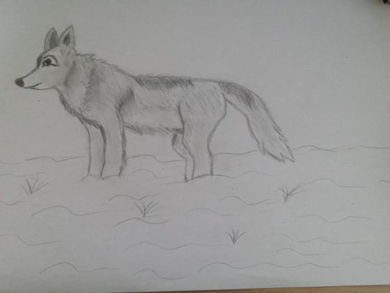 Wolf im Schnee!