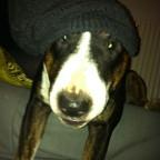 Mein Hund Damien <3