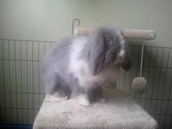 Mein Kaninchen - Nele. :)