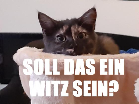 Katzenmeme
