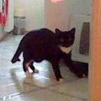 Katze wurde erwischt xD