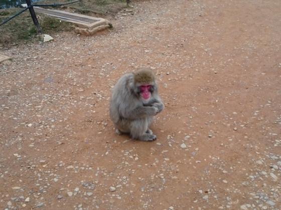 Affenberg Arashiyama 嵐山猿公園