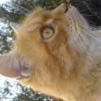 Lauschende Katze