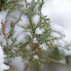 Winter voraus